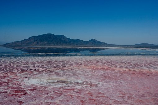 See the Alkaline African Lake that Turns Animals to Stone